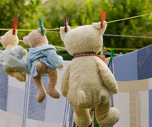 bear and teddy image