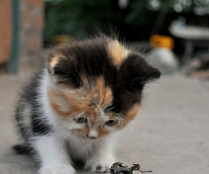 bug, curious, and cute cat image