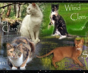 cats, warrior, and fights image