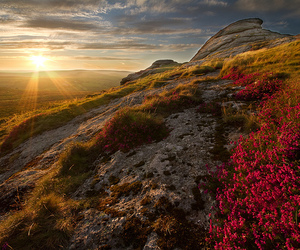flowers, landscape, and sunset image