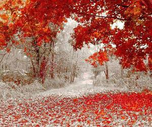 winter, autumn, and snow image