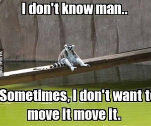 funny, madagascar, and move it image
