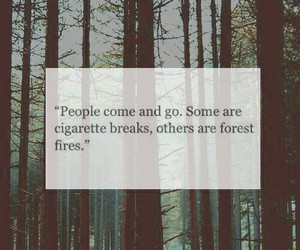 break up, fire, and forest image