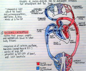 anatomy, biology, and drawing image