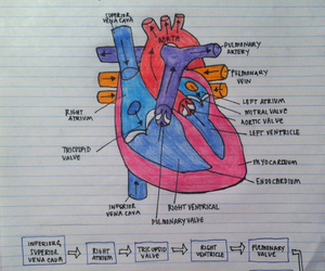 atrium, biology, and heart image