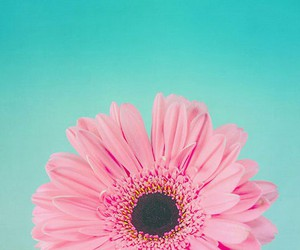 pink, flowers, and blue image