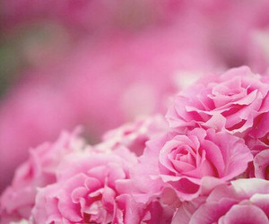 pink, nature, and frower image