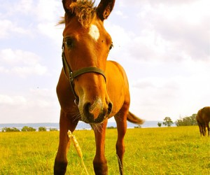 horse, cute, and cuuuuuute image