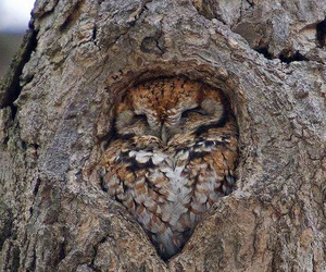 owl, tree, and nature image