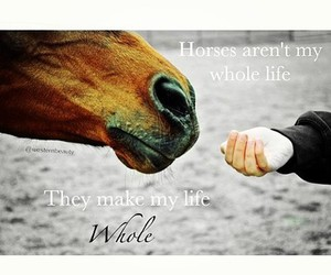 horses, equestrian, and quotes image