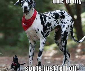dog, funny, and dalmatian image