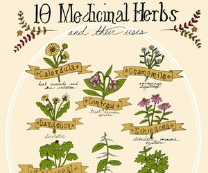 health, herbs, and plants image