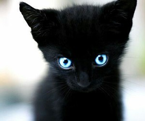 cat, cute, and black image