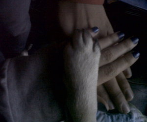 <3, pug, and hands image