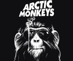 arctic monkeys, monkey, and am image
