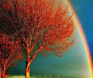 rainbow, tree, and nature image