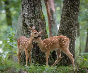 fawn and forest image