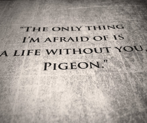 beautiful disaster, book, and pigeon image