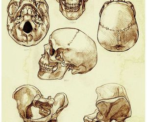 art, draw, and skull image