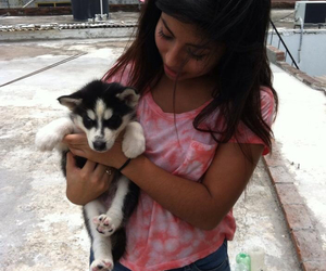 husky, puppy, and scarlette athenea image