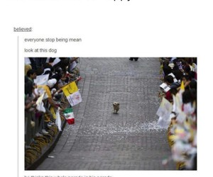 dog, tumblr post, and funny image