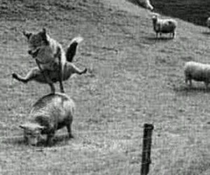 sheep, wold, and wolf image