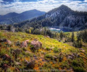 brighton, greenery, and grove image