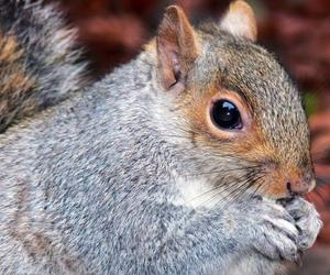 animals, squirrels, and eating image