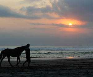 afternoon, nice, and horse image