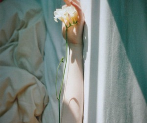 flowers, pale, and vintage image