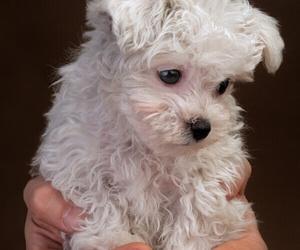 dog, puppy, and animals image