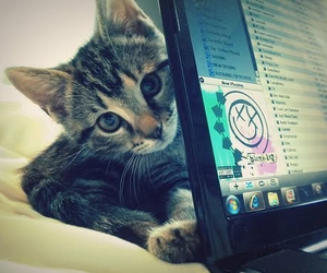cat, iTunes, and cute image