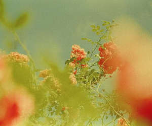 flowers, green, and sky image
