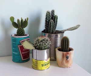 cactus, cool, and hipster image