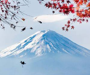 great, japan, and red leaves image