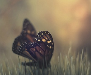 animal, butterfly, and insect image