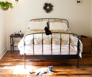 cat, bed, and bedroom image