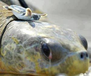 turtle, baby, and quotes image