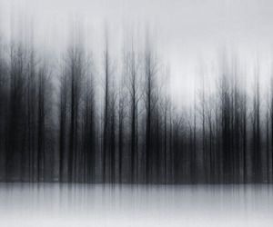 forest, tree, and black and white image