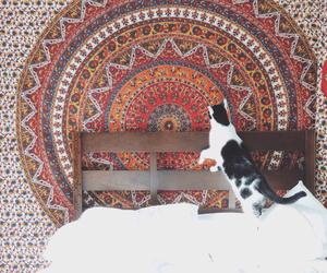 bedroom, blanket, and cat image