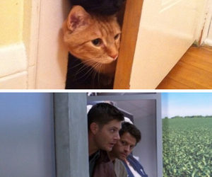 cats, dean, and spn image