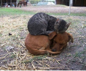 cat, dog, and cute image