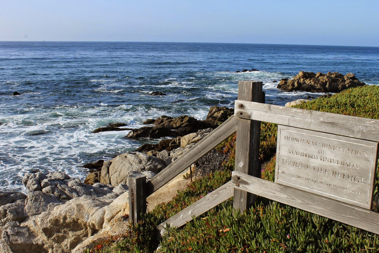 california, ocean, and monterey image