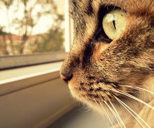animal, cat, and window image