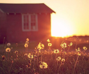 flowers, house, and sun image