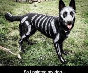 Halloween, dog, and cute image