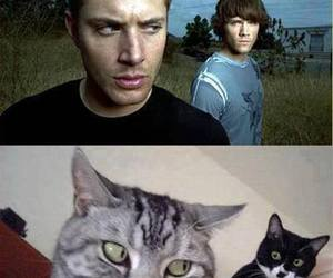 supernatural, cat, and dean winchester image