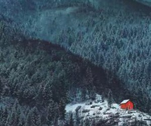 alone, nature, and forest image