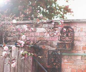 autumn, blossom, and decor image