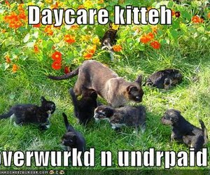 cats, humor, and daycare image